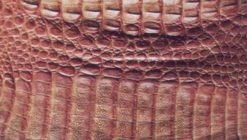 How to identify a Caiman skin